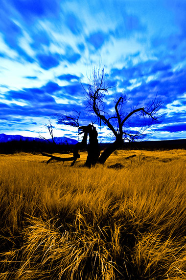 Field of Golden Grasses near Owens River California